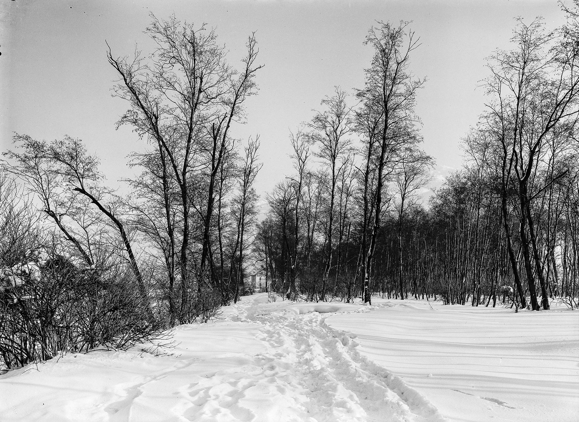 Winterspaziergänge… Mit Den Augen Des Unbekannten Fotografen XXVI
