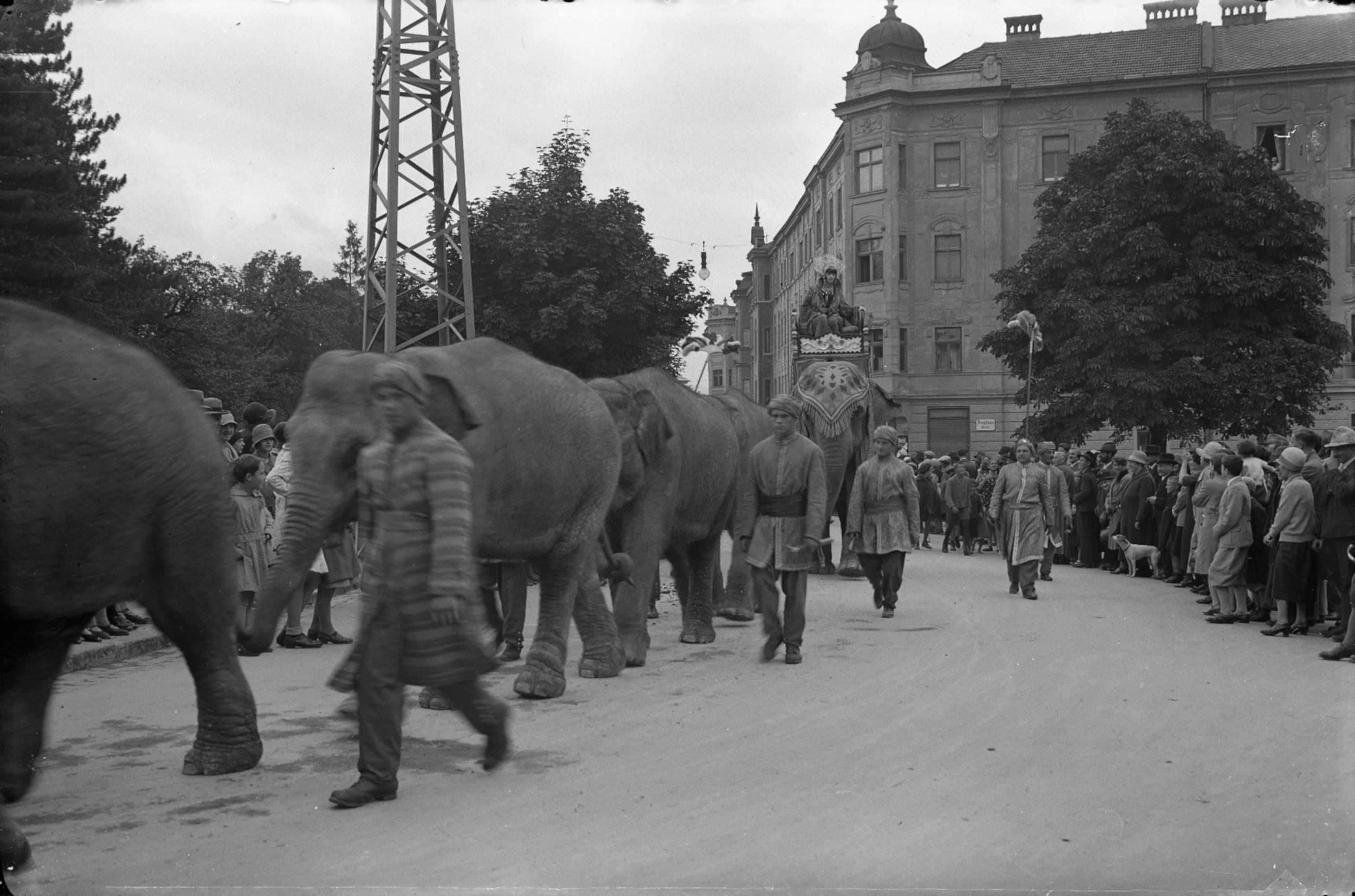 Elefantenspaziergang Durch Dreiheiligen